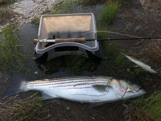 Surf-Casting vs  Fly Fishing: Who Is Doing Better